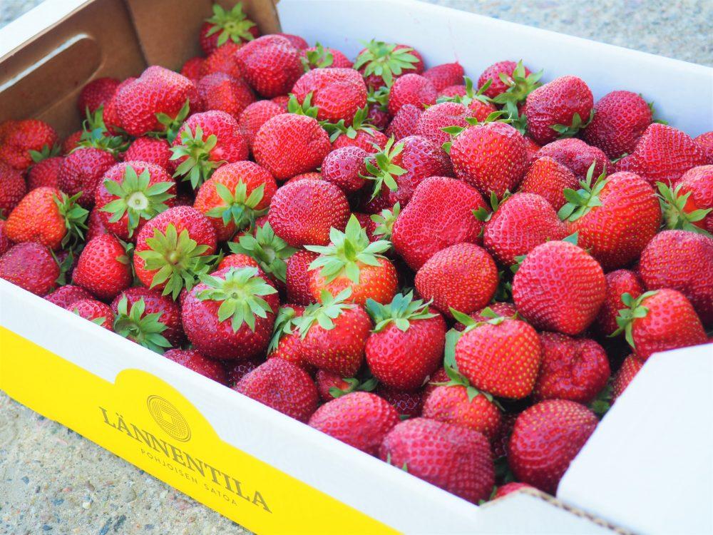 Lännentilan mansikkatilan makeaa Polka-mansikaa saa Oulun alueen kaupoista ja Oulun torilta